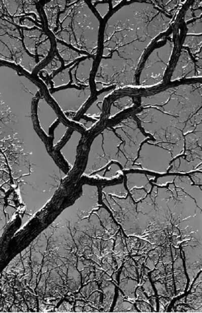 Patrick Linehan, 'Tree Forms - Chicago #3'