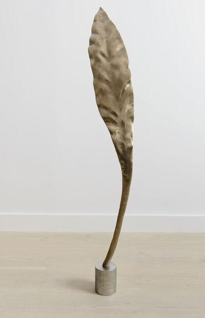 Shan Hur, 'Tree #4 (Pacho)', 2013