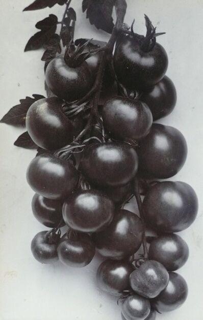 Charles Jones (1866-1959), 'Tomato, Ailsa Craig', c. 1900