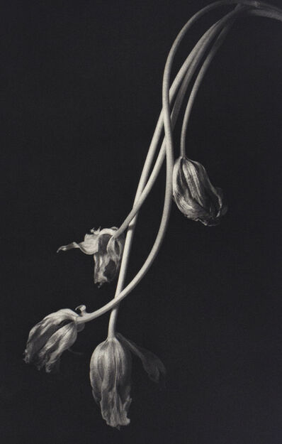 Kenro Izu, 'Still Life 678', 1999