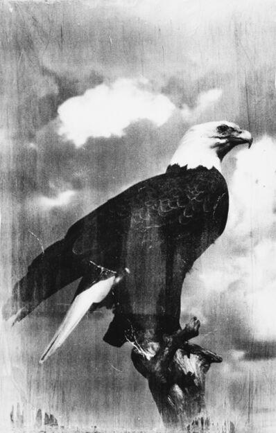 T.R. Ericsson, 'Eagle', 2018
