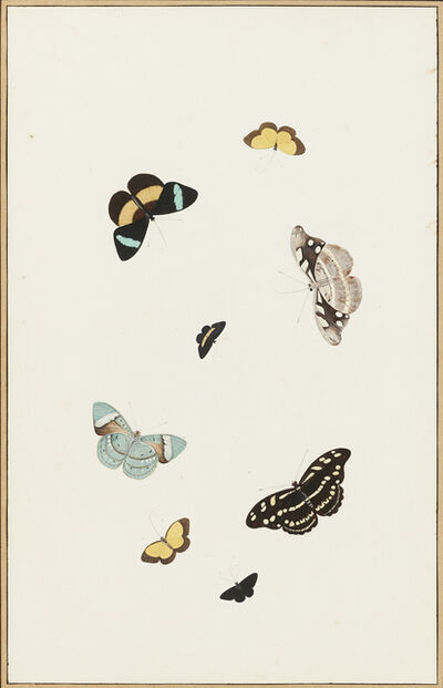 Nicolaas Struyk, 'Butterflies and Moths', ca. 1719