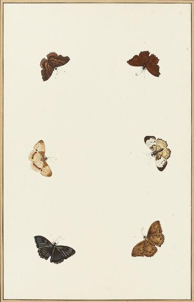 Nicolaas Struyk, 'Moths', ca. 1719