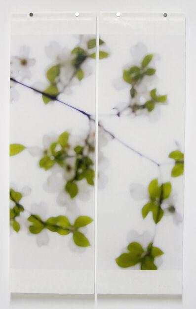 Jeri Eisenberg, 'Dogwood (White)', 2008