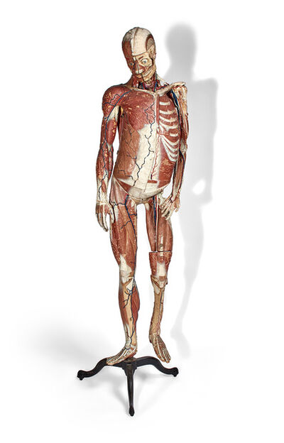Louis Thomas Jerome Auzoux, 'Male Anatomical Model on Stand with Wood Display Cabinet'