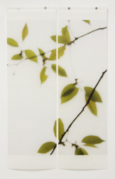Jeri Eisenberg, 'First Folliage', 2008