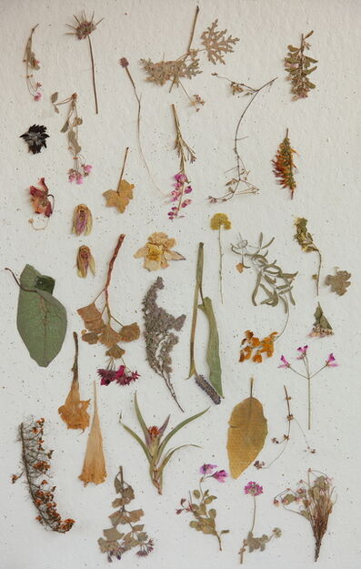 Lien Botha, 'Plant Press Collection', 2009