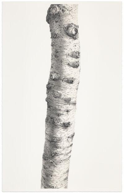 Sandra Allen, 'Sentient', 2015