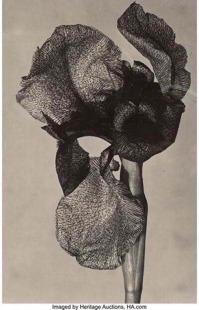 Emmanuel Sougez, 'Iris', circa 1930