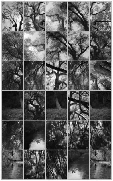 Michael Berman, 'Cross Trees, from Perdido', 2016
