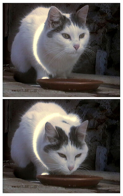 Peter Fischli & David Weiss, 'Busi (Kitty)', 2001