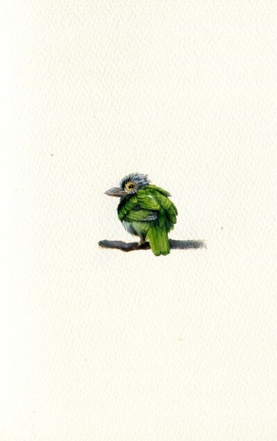 Dina Brodsky, 'Lineated Barbet', 2020