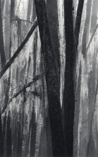 David H. Gibson, 'Backlighted Moss, Mill Pond, Caddo Lake Texas'