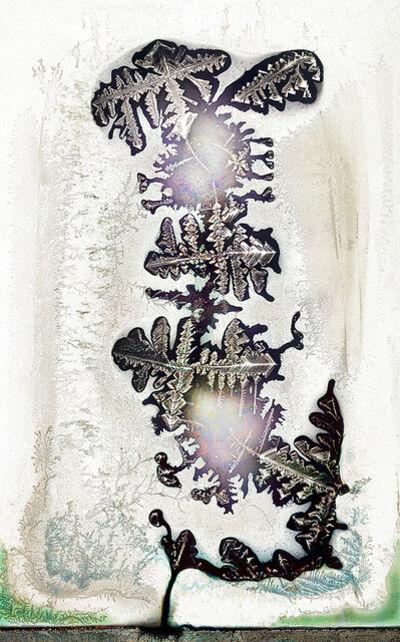 Wolfgang Ganter, 'untitled (bonsai)', 2014