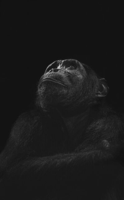 Greg du Toit, 'Primate Ponderings', 2013