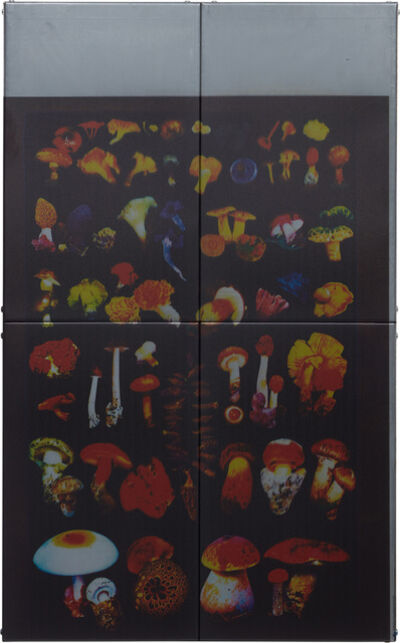 Zak Kitnick, 'American Ships (Edible Mushrooms)', 2013