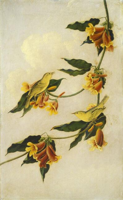 Joseph Bartholomew Kidd after John James Audubon, 'Yellow Warbler', 1830-1833