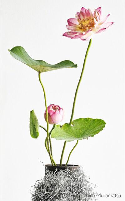 Keiichirô Muramatsu, 'lotus  12', 2018