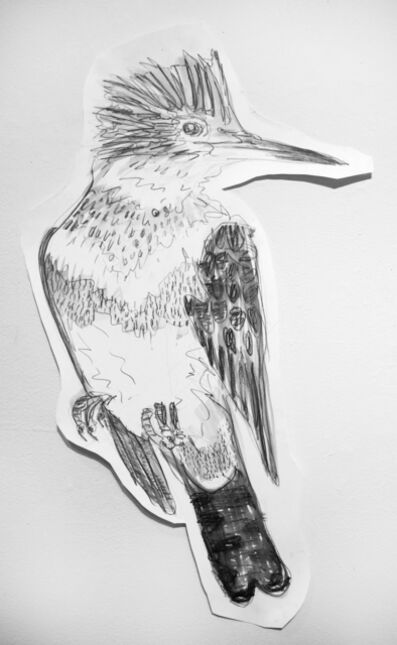 Jules Buck Jones, 'Ringed Kingfisher (Megaceryle torquata)', 2019