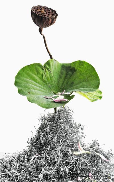 Keiichirô Muramatsu, 'lotus 15', 2018