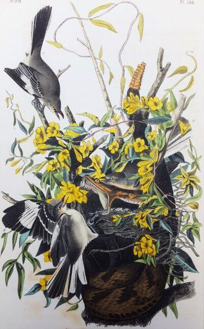 John James Audubon, 'Common Mocking Bird', 1840-1844