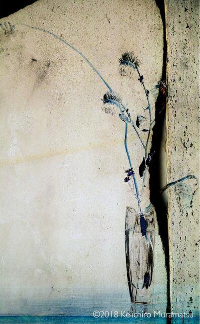Keiichirô Muramatsu, 'Synurus pungens 1', 2018