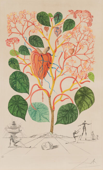 Salvador Dalí, 'Begonia (Anacardium recordans), from Flordali® (Flora Dalinae)', 1968