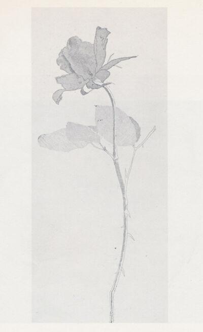 David Hockney, 'The Rose and the Rose Stalk', 1969