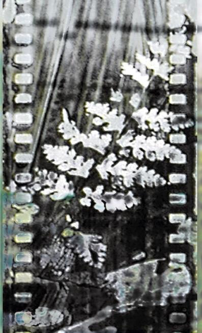 Donna Cameron, 'Fossil Fern'