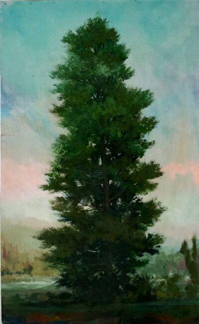 Peter Hoffer, 'Spruce', 2021