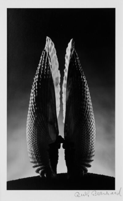 Ruth Bernhard, 'Angel Wings', 1943