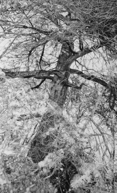 Mirjam Abraas, 'Kedra', 2016
