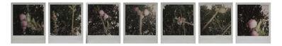 Liu Wei 刘炜, 'Peach Blossom series ; set of 7 original works', 2007