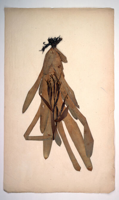 Manuel Frolik, 'Bilbergia amoena (Herbarium Dresdense', 2018