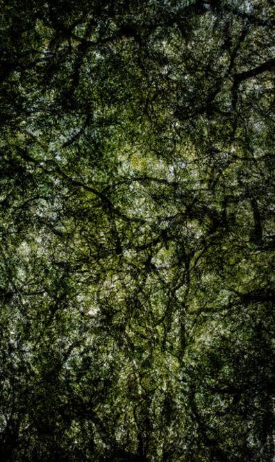 Santeri Tuori, 'Forest #23', 2015