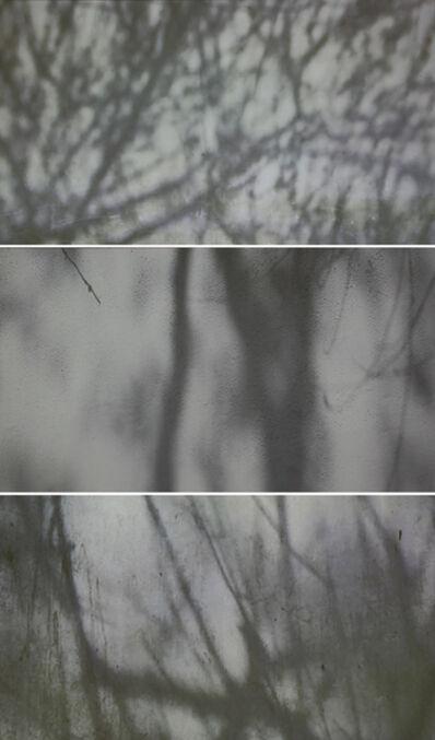 Barbara Edelstein, 'With Breeze: Shadows', 2012