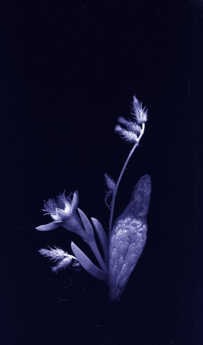 Chong Weixin, 'flores nativias .2', 2017