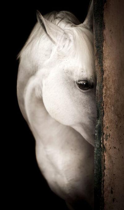 Raphael Macek, 'Equine Beauty #9', 2017