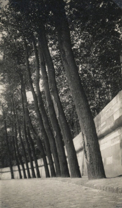 Dora Maar, 'Untitled (Tall Tree Row on street Side)', 1930c