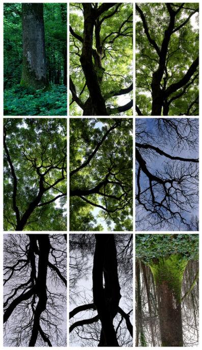 Jeffrey Blondes, 'Le Bois de Mametz'