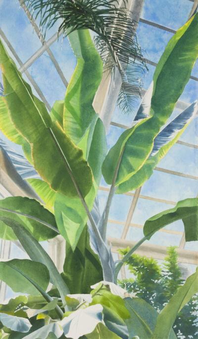 Ben Norris, 'Brooklyn Botanical Garden No. 1: Greenhouse Interior', 1991