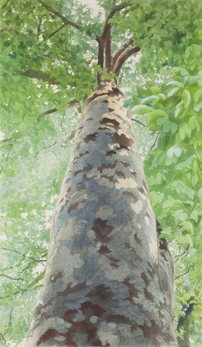 Ben Norris, 'Tree II', 1989