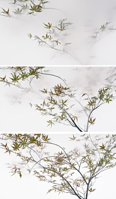 Wu Chi-Tsung, 'Still Life 009 - Maple', 2018