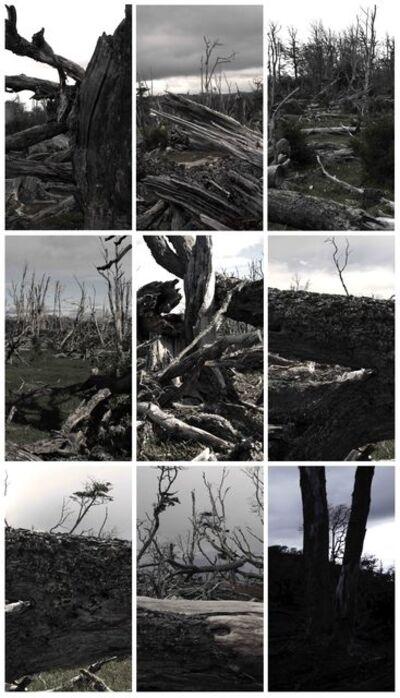 Jeffrey Blondes, 'Tierra del Fuego; 360˚ Forest  ', 2013