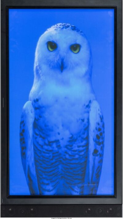 Robert Wilson, 'Blue Owl', 2006