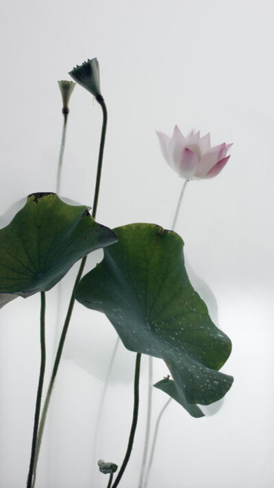 Wu Chi-Tsung, 'Still Life 010 - Lotus', 2018