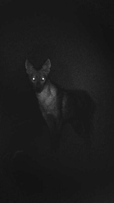 Michal Rovner, 'Ofel (Deep Darkness)', 2016