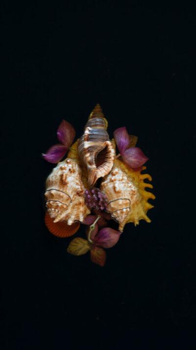 Mariana Palma, 'Sem Título [Untitled]', 2019