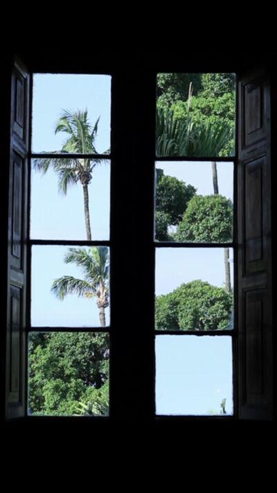 Katia Maciel, 'Desarvorando [Unfolding Trees]', 2006/2015