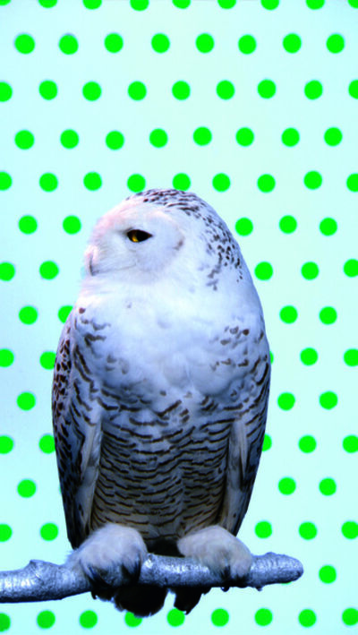 Robert Wilson, 'Kool Snowy Owl', 2006